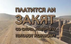 platitsya-li-zakyat-so-skota-kotorogo-pitayut-kormom