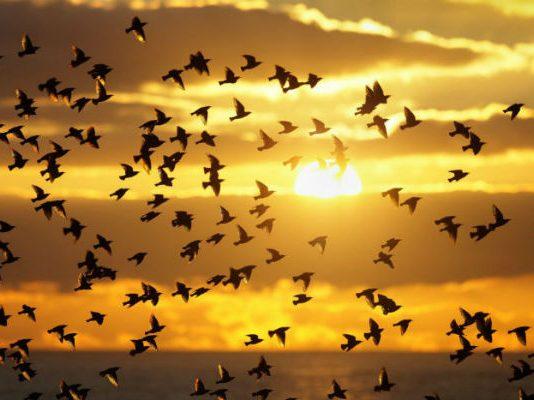 Аллах подчинил Сулейману птиц