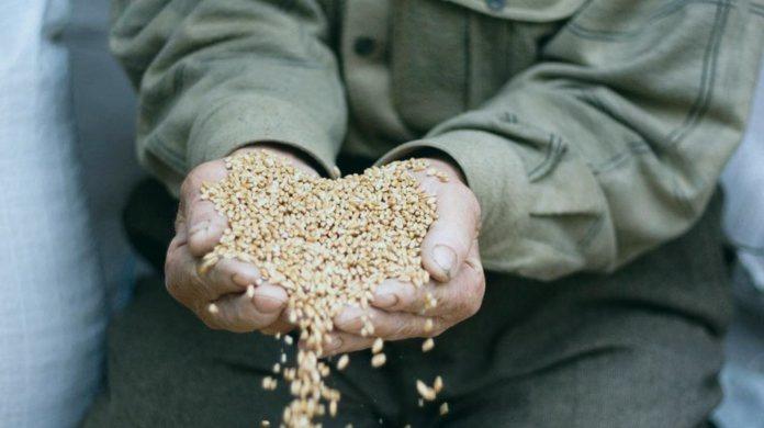 Зерна, которыми дается закят фитр - а можно ли давать деньгами?